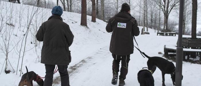 Kontrolle - mit - Hunden - von - Schnittgut - auf - asiatischen - Laubholzbockkäfer