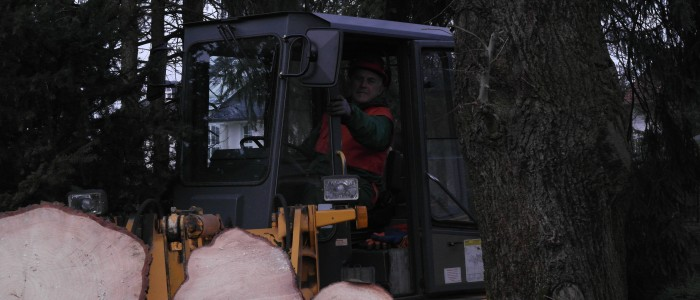 Baggerfahrer - transportiert - abgesägte - Baumstämme