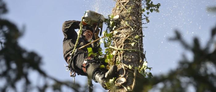 Baumfällung - in - großer - Höhe - mit - Motorsäge