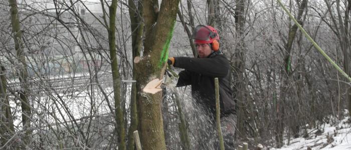 Fällung - des - Baumes
