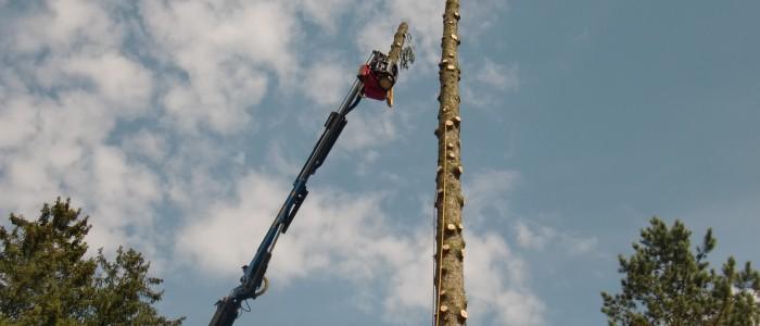 Kran - greift - Stück - der - gefällten - Baumspitze