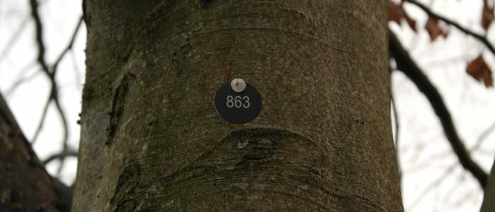 Baumnummer - für - Eintragung - ins - Baumkataster