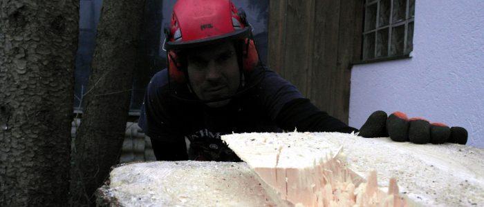 Baumpfleger - inspiziert - Baumstumpf - nach - Fällung