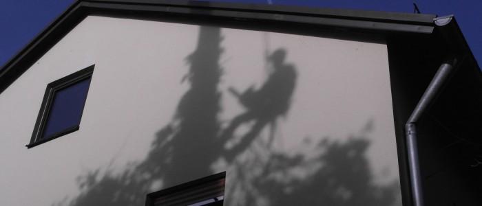 Schatten - eines - Baumpflegers - bei - Fällung