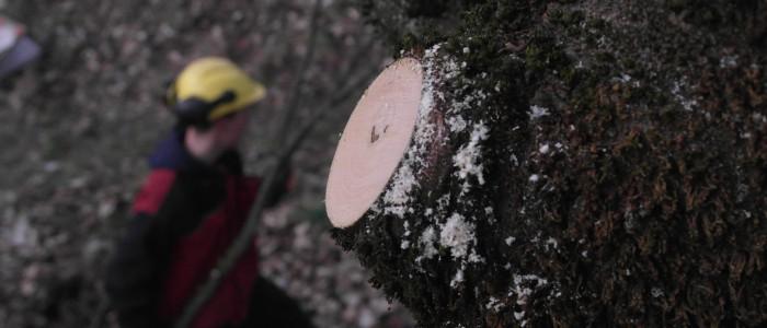 Sauberer - Baumschnitt - Arbeiter - im - Hintergrund