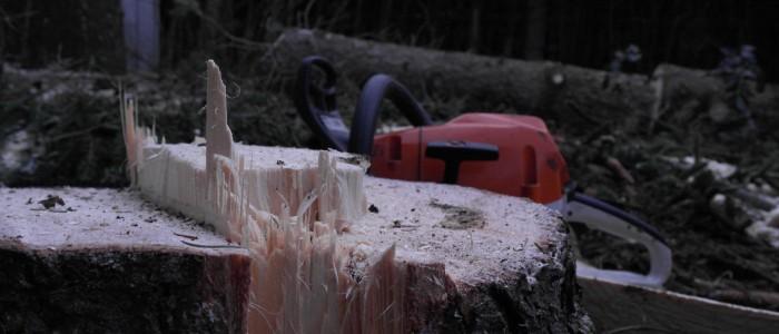 Stumpf - des - gefällten - Baumes