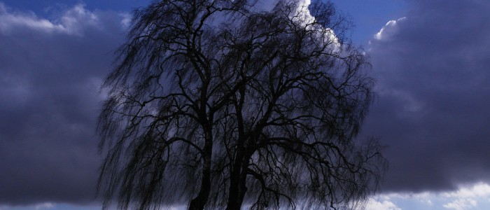 Kontrolle - einer - Birke - auf - Baumpilze