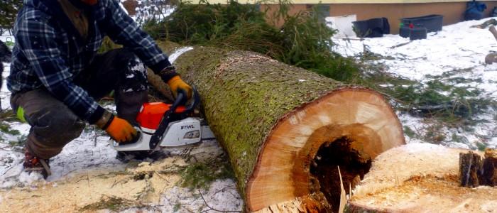 Zerkleinern - des - gefällten - Gefahrenbaums
