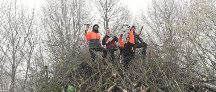 motivierte - Baumpfleger - auf - Holzstapel