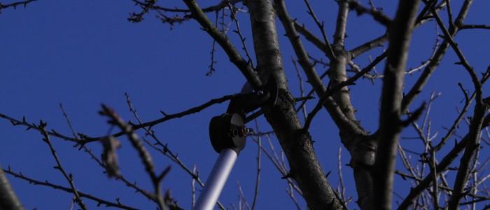 Beschneiden - eines - Obstbaums - mit - Teleskopschneider