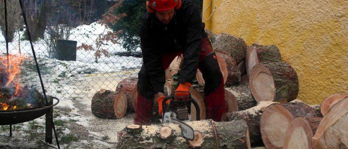 Arbeiter - zersägt - Baumstamm