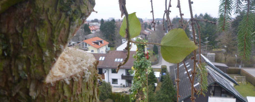 Ausblick - Baumfällung