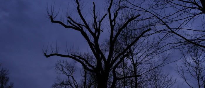 Kappung - mit - austreibenden - Zweigen