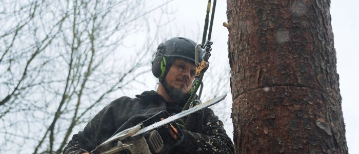 Baumfällung-extrem
