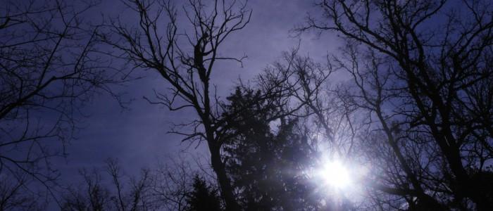 Baumfällung - Krone Eindämmung Gehölzpathogene