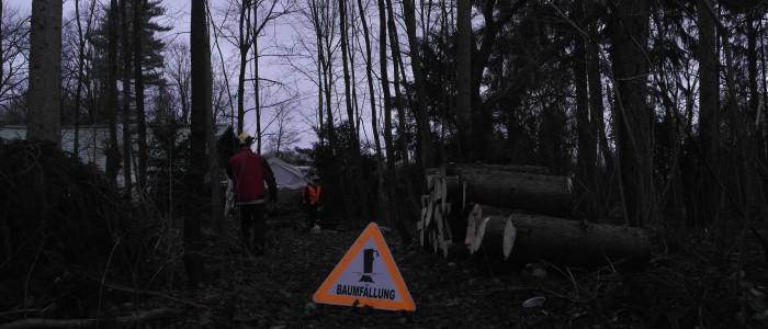Baumfällungne - Hinweisschild