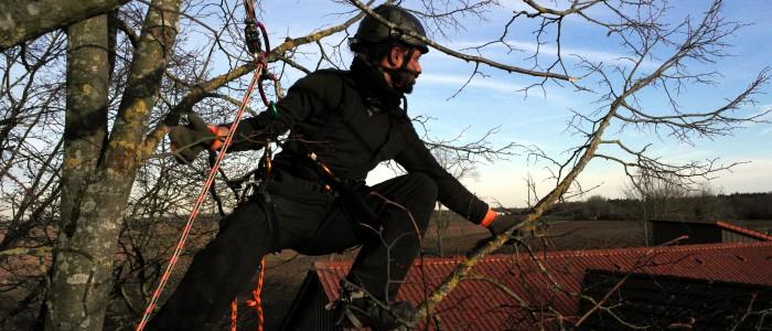 Baumpfleger - klettert - auf - Baum