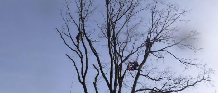 Baumpfleger - auf - Baum
