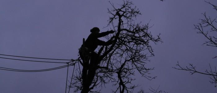 Baumpfleger - schneidet - Ast