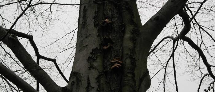 Baum - Baumpilzbefall