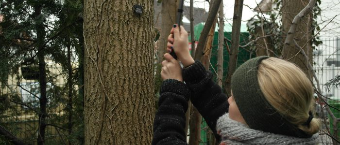 Anbringen - einer - Baumplakette