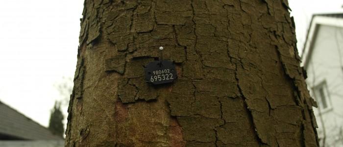 Baumplakette - Baum