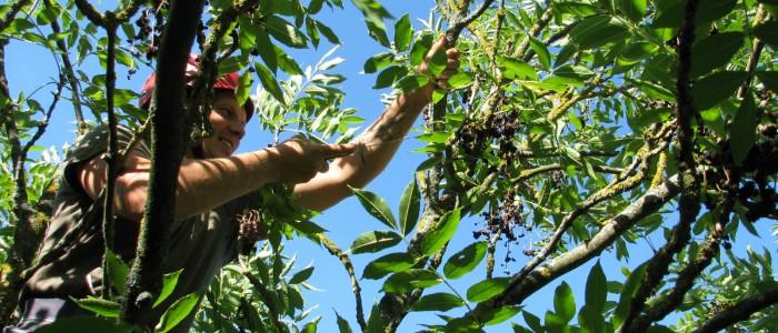 Baumschnitt - Baumpfleger - Sommer