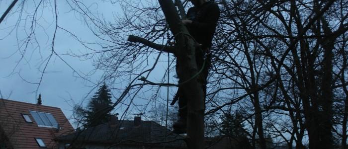Baumschnitt - Seilklettertechnik