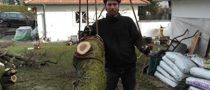 Baumstück - Seilklettertechnik