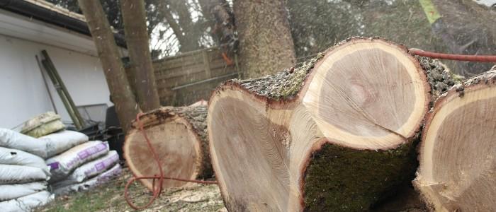 Gefällte - Baumstücke