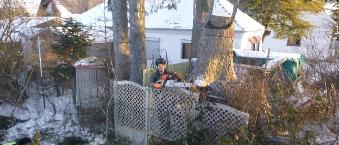 Baumstumpfentfernung - mit - Kran