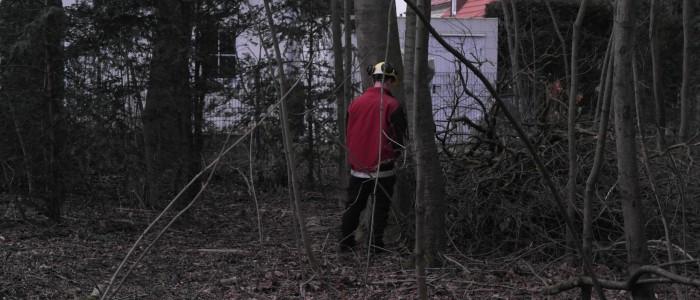 Baumumfeldverbesserung
