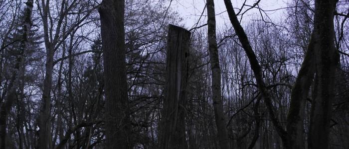 Torso - eines - Biotopbaumes