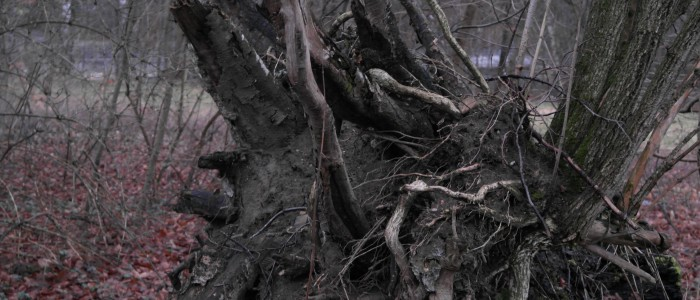 Sturm - aufgegrabene - Wurzel
