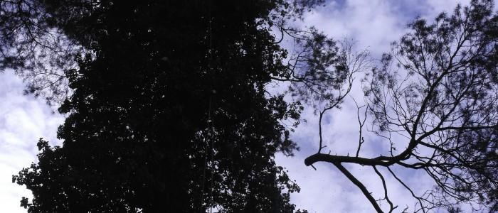 Baumpfleger - wirft - Äste - hinunter