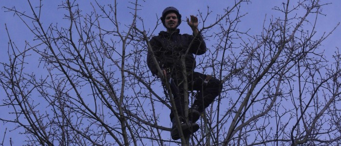 Baumpfleger - schneidet - Ast - und - wirft - hinunter