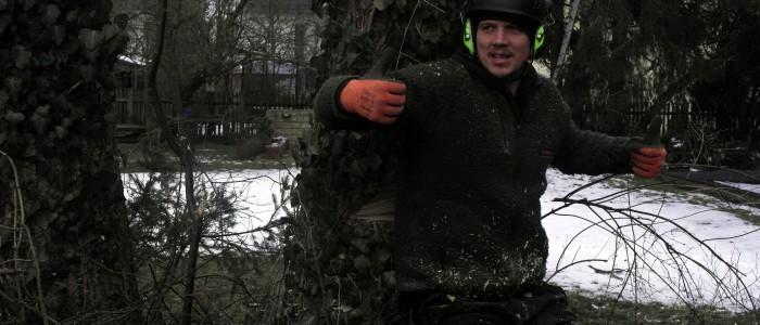 Weiterbildung - Baumfällung - Einführung