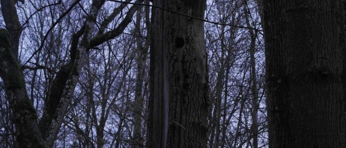 Spechthöhle - im - Biotopbaum