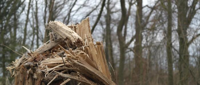 Gesplitterter - Baum - nach - Sturm