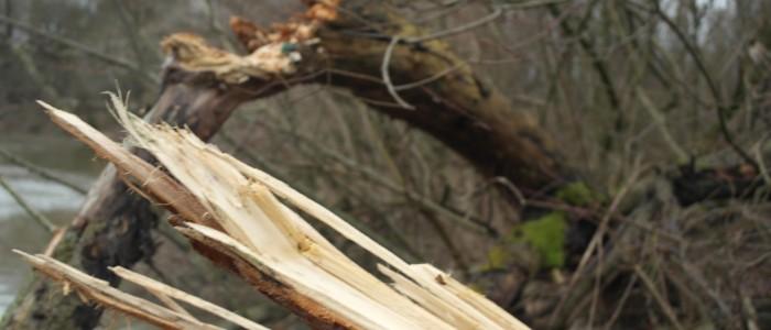 Sturmschaden - umgefallener - Baum