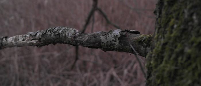 Totholzast - Baum
