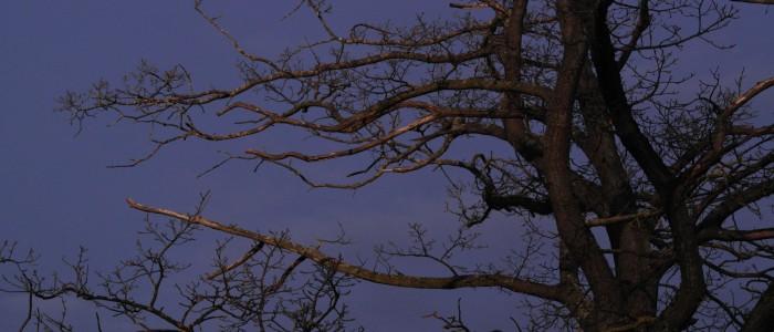 Totholzäste - am - Baum