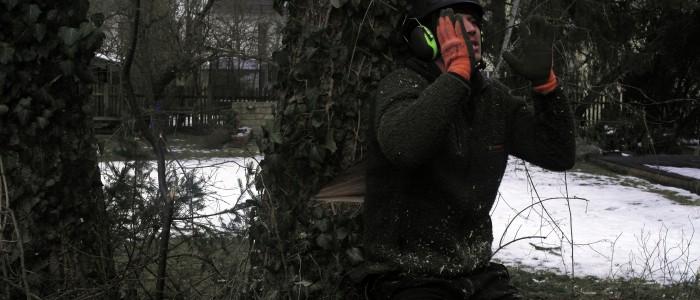 Weiterbildung - Baumfällung
