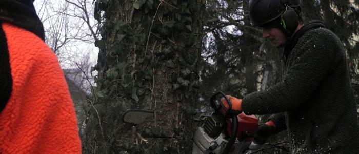 Weiterbildung - Baumfällung - Training
