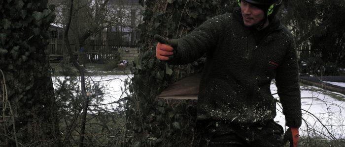 Weiterbildung - Baumfällung - Test