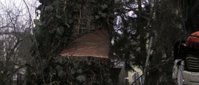 Keil - Baumfällung - Weiterbildung
