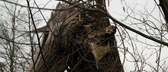 Abgebrochener - Baum - durch - Sturmschaden
