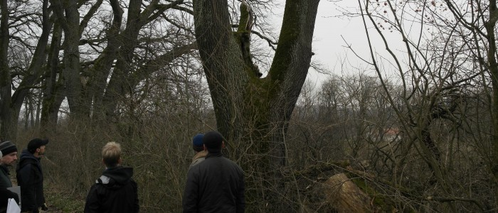 Visual Tree Assesment (VTA)