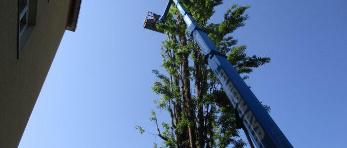 Hubarbeitsbühne (35m)- Populus nigra
