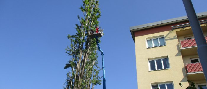 Arbeitseinsatz AS-Baum II
